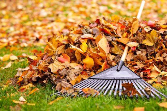 Hrabanie trávnika na jeseň - Wellness Magazín