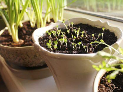 Ako si vypestovať domáce bylinky - Wellness Magazín