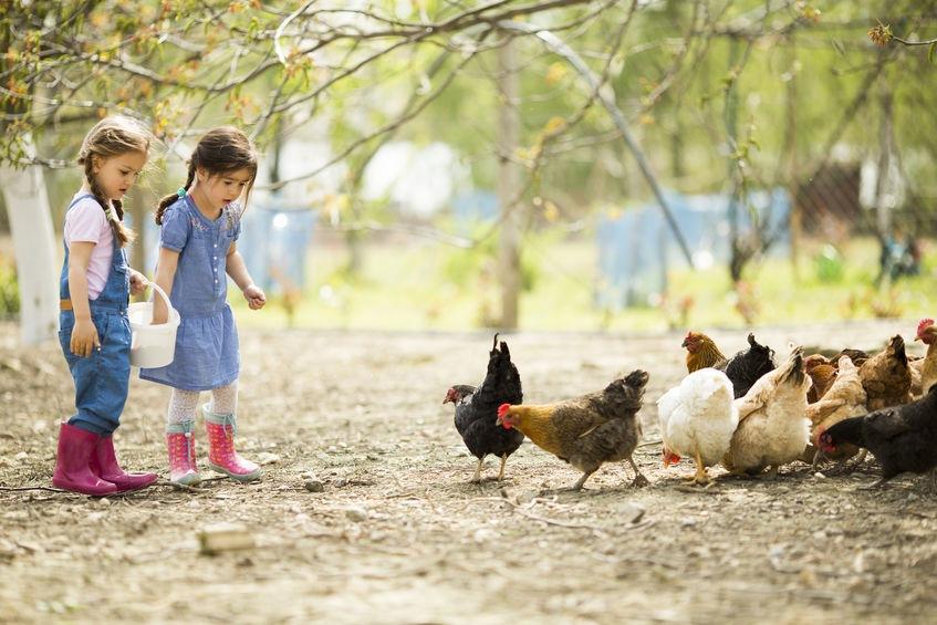Dve malé dievčatá kŕmia sliepky - Wellness Magazín