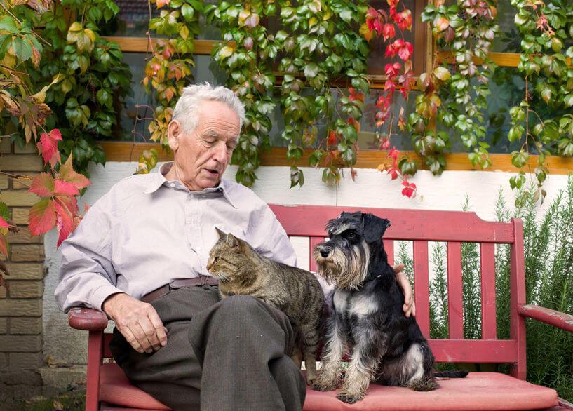 terapia zvieratami
