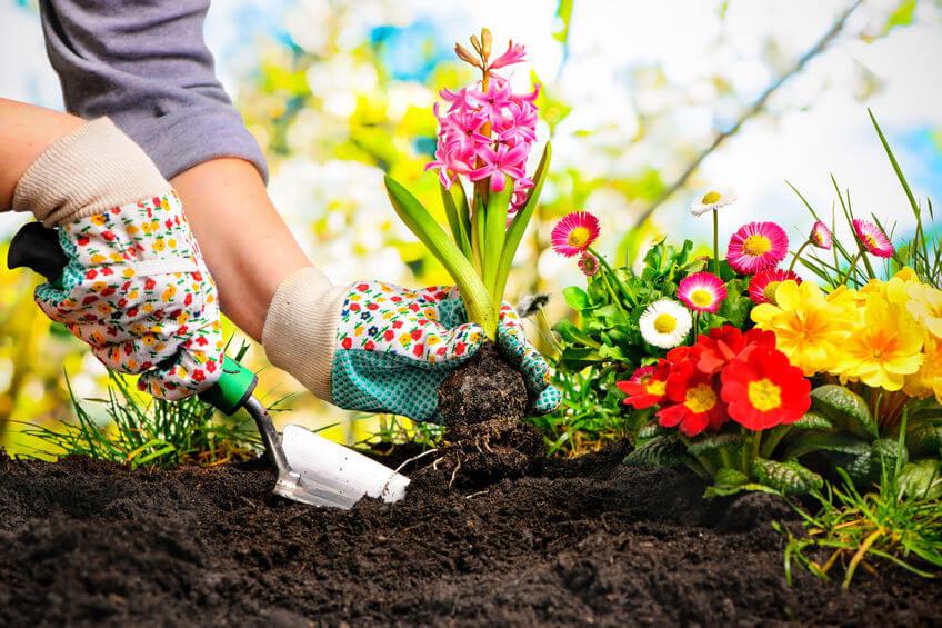sadenie trvaliek do jarnej záhrady