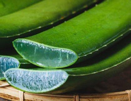 aloe vera je vhodné na rôzne využitie v starostlivosti o pleť a pokožku