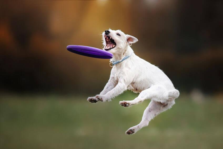 frisbee môžete trénovať aj so svojím psím miláčikom, kedy pôjde dokonca o dogfrisbee