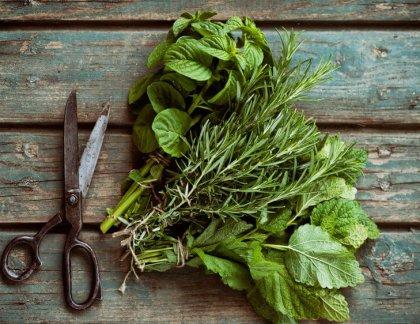 Aké bylinky a ako sušiť a uskladňovať na ďalšie použitie