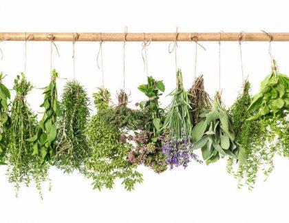Pre bylinkárov 1: Zber bylieniek