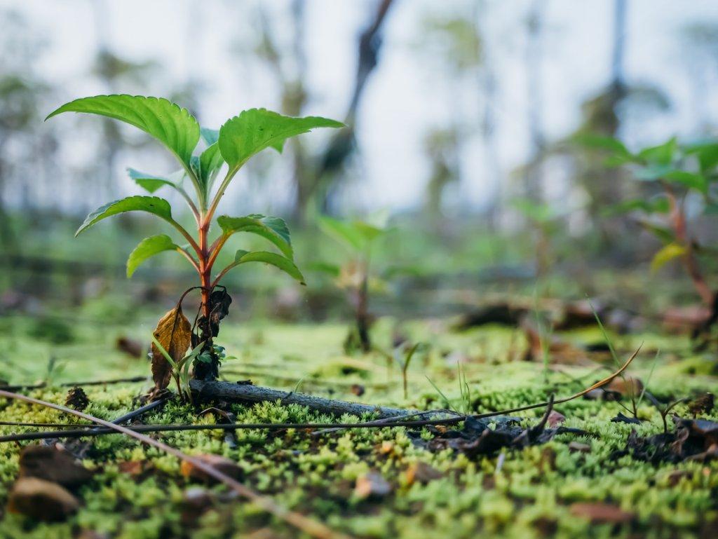 Maličká rastlinka, ktorá vyrastá po daždi.