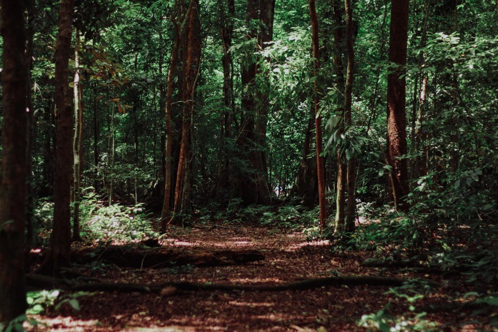 geocaching_forest_les_stromy